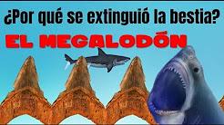 La extinción del Megalodón. ¿Por qué se fue la bestia?