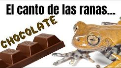 El canto de las ranas chocolate