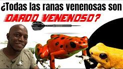 ¿Todas las ranas venenosas eran usadas por los por los indígenas para envenenar sus dardos?